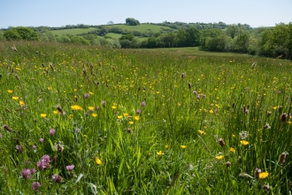 Lowland meadow