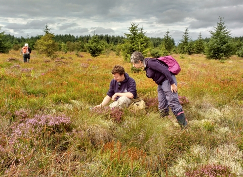 Where the Wild Things Are Bog Survey